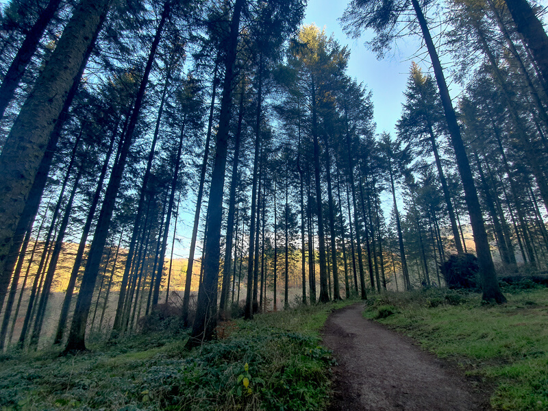 Walking through Macclesfield Forest