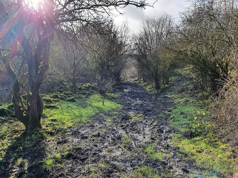 Muddy sections along Gratton Dale walk