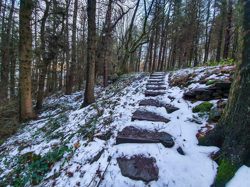 Steps through the woods