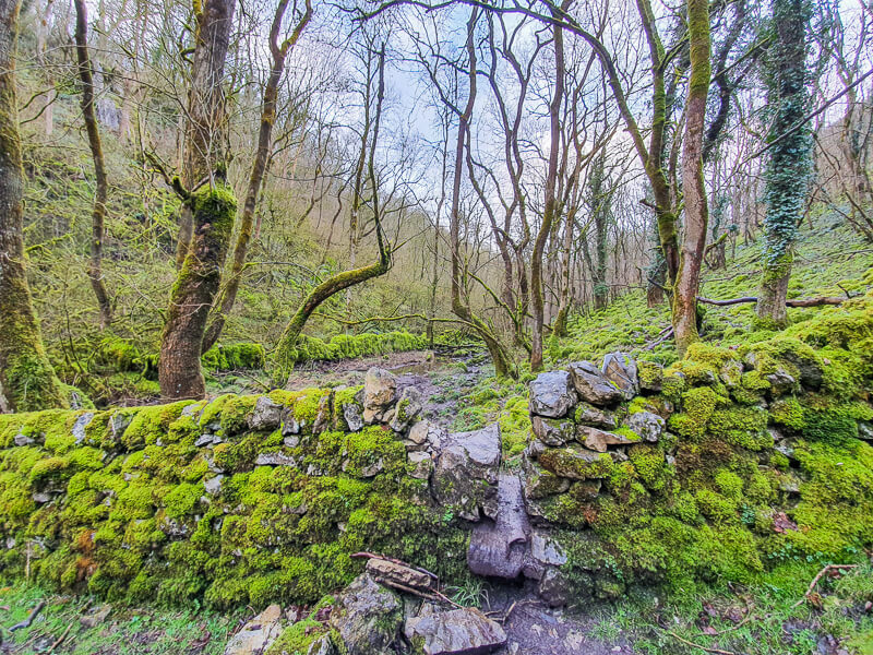 Monk's Dale dry stone wall covered in moss