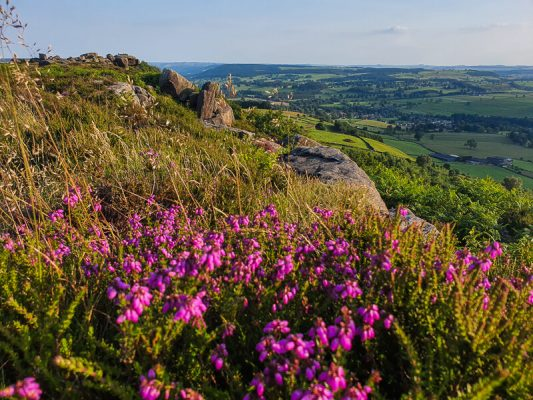 Bell Heather and views of Curbar Edge