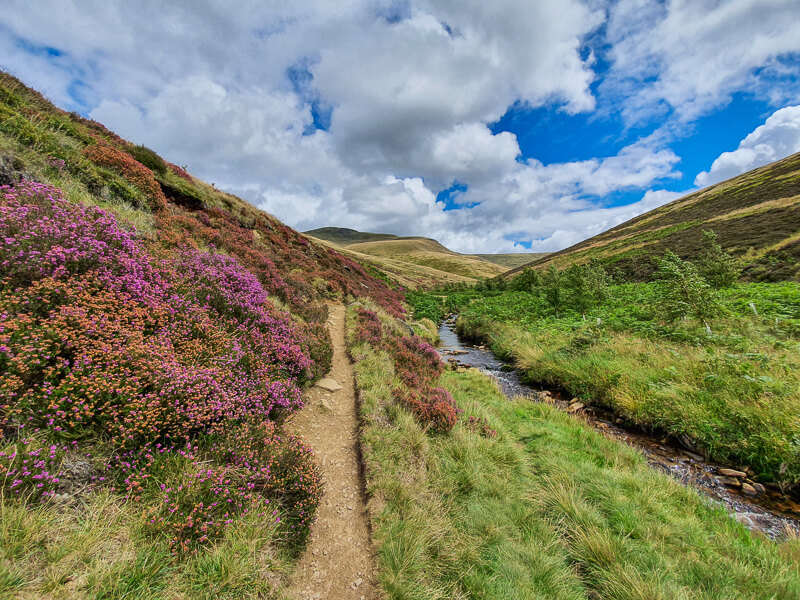 Purple heather and path