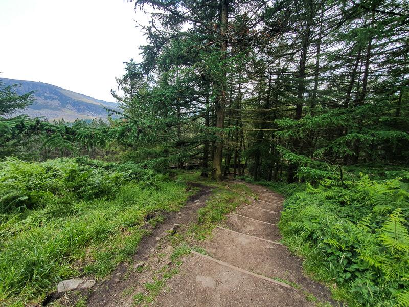 Steps into woods near Dovestone Reservoir