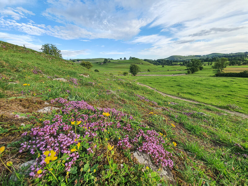Flowers and hills