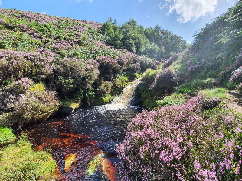 Small waterfall and heather