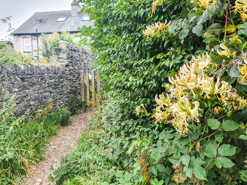 Honeysuckle and gate