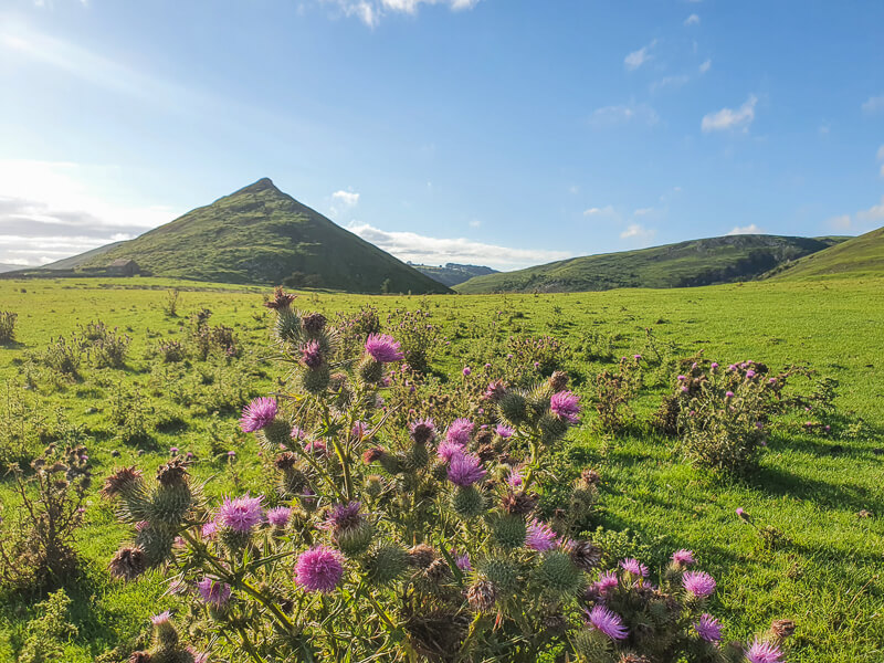 Thorpe Cloud in Peak District - Hill and purple flowers