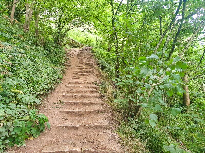 Steps in woodlands