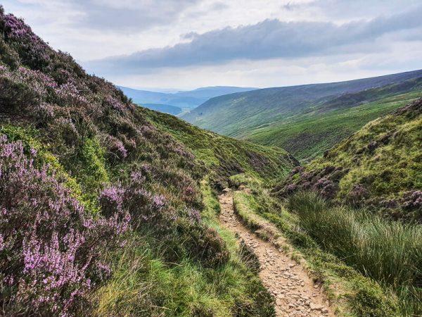Path down through the heather