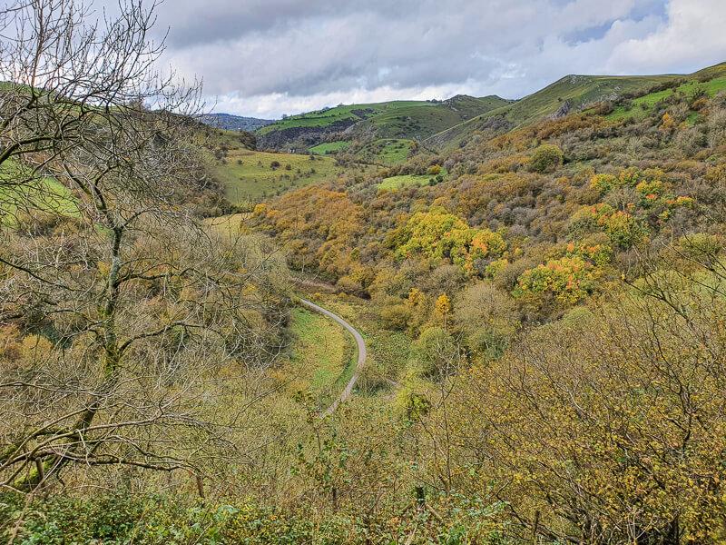 Autumn trees in Manifold Valley