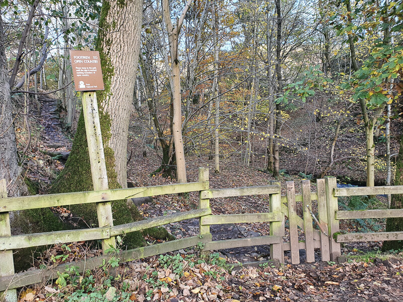 Wooden gate and fence
