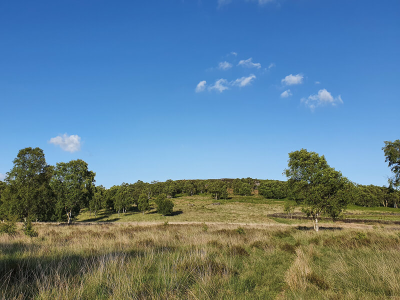Grassy land with blue sky