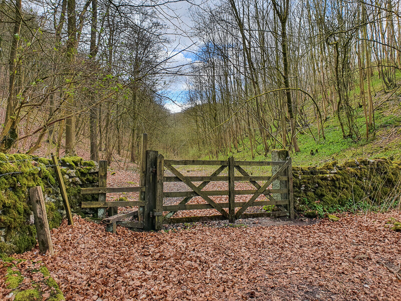 Gate and woods