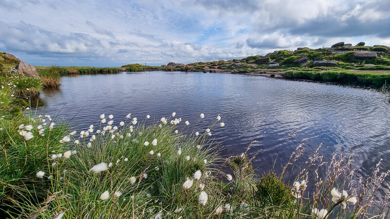 Tarn with Cottongrass